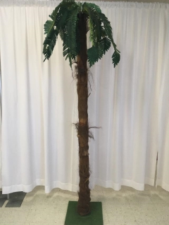 Rental store for Palm Tree, 7 Ft. in Omaha NE